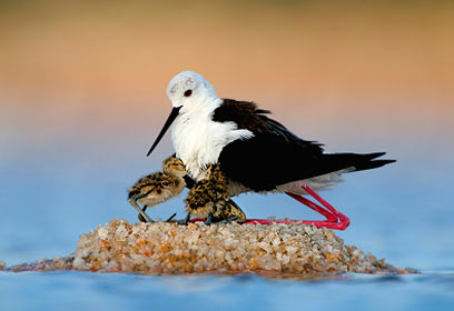 צילום: Veolia Environnement Wildlife Photographer of the Year 2010 / Yossi Eshbol