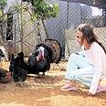 ילדה ותרנגולות בשרון.
