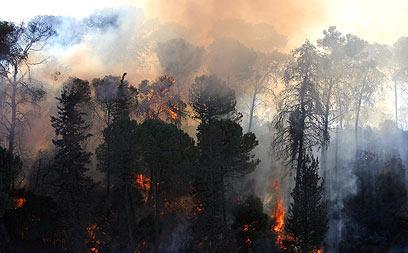 לטענת הכבאים, הרפורמה לא תפתור את הבעיות. השריפה בכרמל (צילום: דרור עינב) (צילום: דרור עינב)