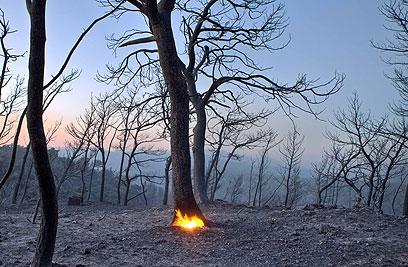 """בית אורן אחרי השריפה. """"עכשיו החיות חוזרות, ונכנסות לקיבוץ"""" (צילום: נועם מושקוביץ) (צילום: נועם מושקוביץ)"""