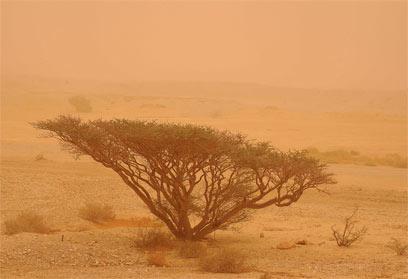 סופת חול. קו המדבר מצפין  (צילום: יגאל לאובל ) (צילום: יגאל לאובל )