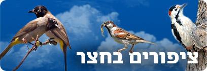 צילום: יהודה כץ, דני לרדו, ישראל פיכמן