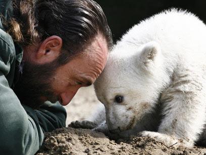 אימו דחתה אותו והוא גודל על ידי צוות גן החיות (צילום: AP) (צילום: AP)