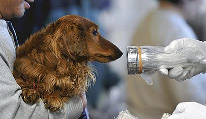 כלב ששרד את האסון. גם לו בודקים קרינה (צילום:AP) (צילום:AP)