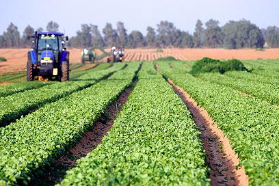 Farming in southern Israel (Photo: Eliad Levy) (Photo: Eliad Levy)