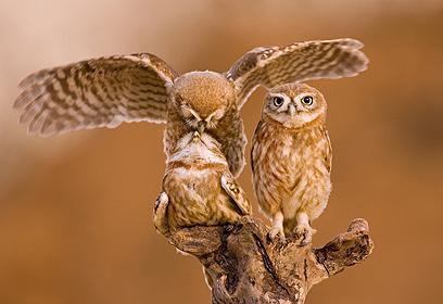 צילום: Ilia Shalamaev / Veolia Environnement Wildlife Photographer of the Year 2010