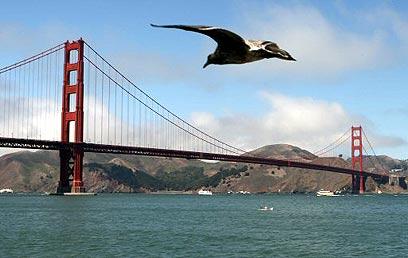 סן פרנסיסקו (צילום: AFP) (צילום: AFP)