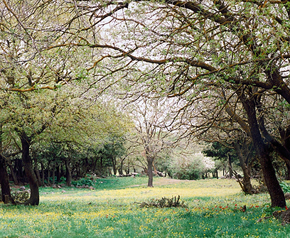 יער אודם  (צילום: אבי הירשפלד) (צילום: אבי הירשפלד)
