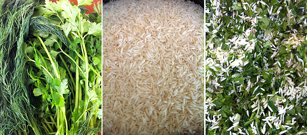 ירוקים ולבנים - אורז בעשבי תיבול (צילום: אורי שביט)