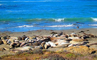 רובצים בנחת על החוף (צילום: באדיבות בלוג טיול לחוף המערבי ) (צילום: באדיבות בלוג טיול לחוף המערבי )