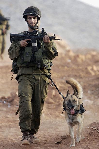 לוחם עוקץ וכלבו במלחמת לבנון ה-2 (צילום: gettyimages) (צילום: gettyimages)