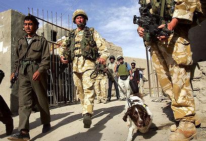 כלבי הרחה לחומרי חבלה באפגניסטן (צילום: gettyimages) (צילום: gettyimages)