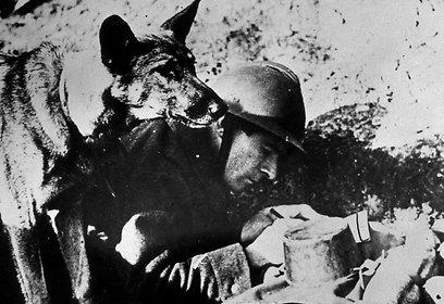 כלב וחייל בצרפת (צילום: gettyimages) (צילום: gettyimages)