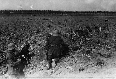 נעזרים בכלבים לשליחת הודעות בזמן מלחמה (צילום: gettyimages) (צילום: gettyimages)
