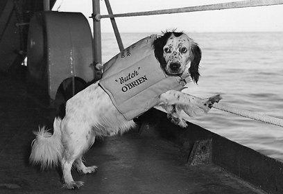 כלבים רבים שימשו כקמעים ליחידות צבאיות (צילום: gettyimages) (צילום: gettyimages)