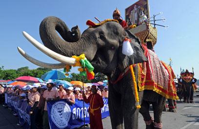 בתאילנד, גם הפילים אדומים היום (צילום: AFP) (צילום: AFP)
