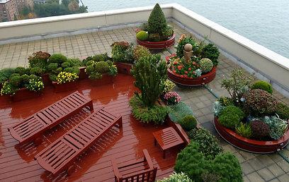 מנהטן: גגות חומים נצבעים בירוק (צילום:  shutterstock) (צילום:  shutterstock)