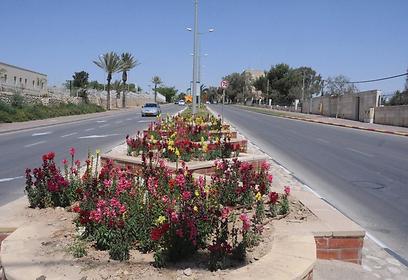 מעל 50% מהדירות שייכות למשקיעים. שכונה ד' בבאר שבע (צילום: הרצל יוסף) (צילום: הרצל יוסף)