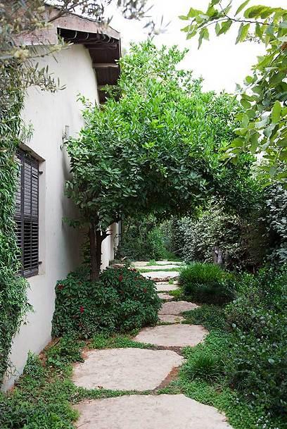העצים בחצר שומרים על פרטיות הדיירים ומאפשרים לחלונות להיות פתוחים תמיד (צילום: שי אפשטיין) (צילום: שי אפשטיין)