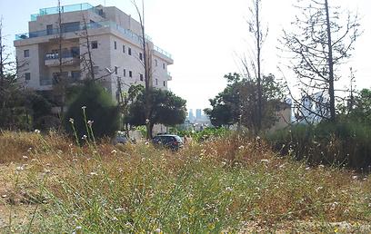 שטח מוזנח (צילום: דב גרינבלט, החברה להגנת הטבע) (צילום: דב גרינבלט, החברה להגנת הטבע)