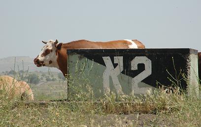 (צילום: יואב שטיינמן) (צילום: יואב שטיינמן)