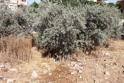 הזירה שבה נמצאה גופתו של הילד אנאס (צילום: עידו ארז) (צילום: עידו ארז)