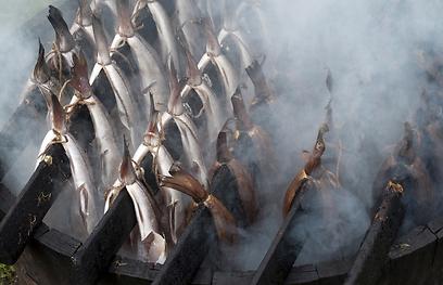 מחיוון לזהוב. עישון חם (צילום: shutterstock) (צילום: shutterstock)