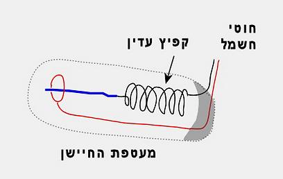 חיישן רעידות/תנודות מכני פשוט  (איור: עידו גנדל) (איור: עידו גנדל)