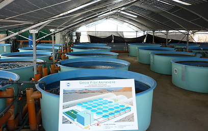 מערכות גידול סגורות, שלא יוצרות זיהום סביבתי  (צילום: GFA)