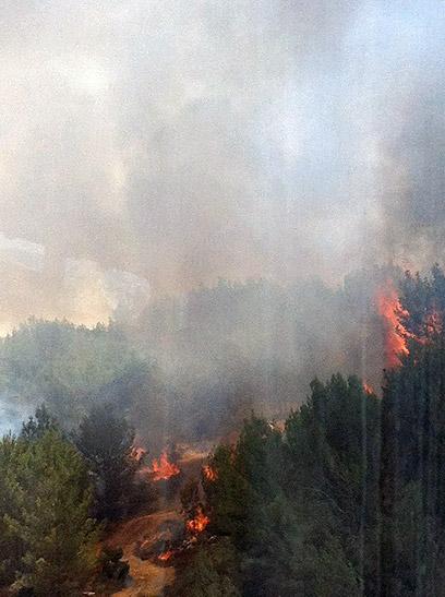 היער עולה באש (צילום: שני שלום)