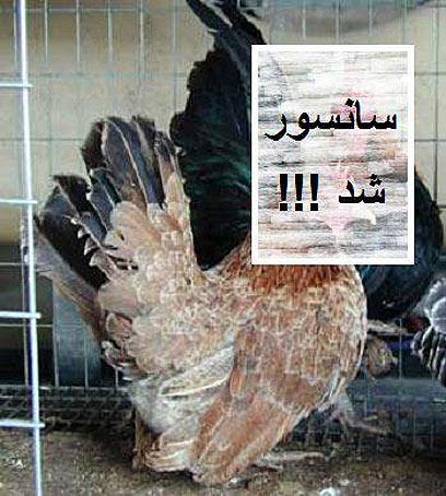 """""""צנזורה"""" על ראש העוף. בפייסבוק מגחכים ()"""