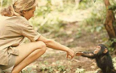 """""""אני...ג'יין"""". סיפור חייה של חוקרת השימפנזים  (איור: פטריק מקדונל)"""