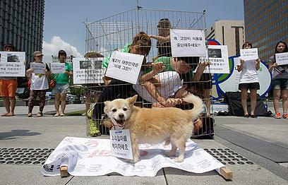 פעילים כלאו עצמם בכלוב בהפגנה בסיאול (צילום: gettyimages) (צילום: gettyimages)