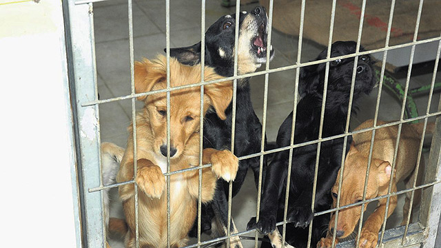 בארצות הברית נערכים 75,000 ניסויים בכלבים מדי שנה (צילום: הרצל יוסף) (צילום: הרצל יוסף)