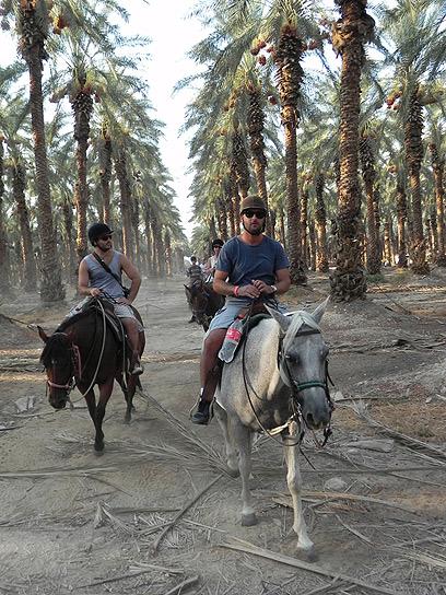"""עוד דרך להכיר את התמר. רכיבה על סוסים במטעי קלי""""ה (צילום: זיו ריינשטיין) (צילום: זיו ריינשטיין)"""
