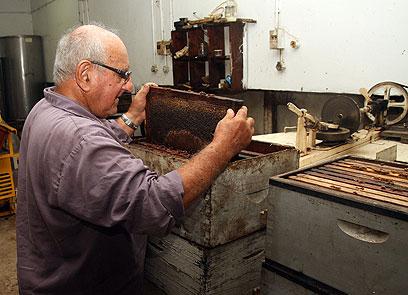 דוד גרטל, בנה כוורת שקופה שבה ניתן לצפות בתהליך ייצור הדבש (צילום: רועי עידן)