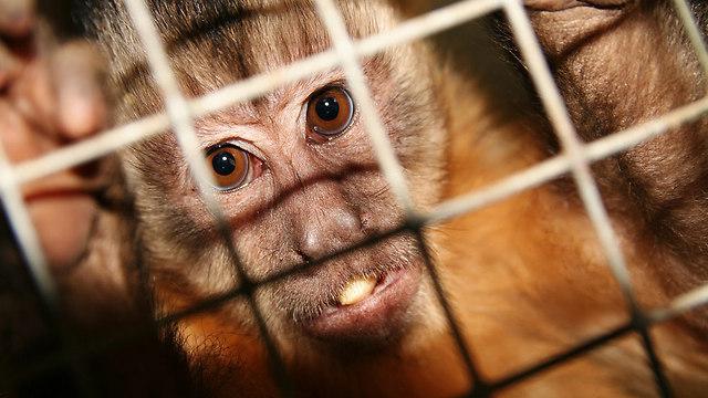 42 monkeys were tested on in 2015 (Photo: Shutterstock)