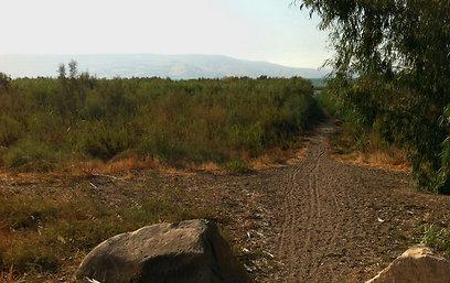 השביל לחוף הקיבוץ. המים במרחק 50 מטר (צילום: מאור בוכניק)