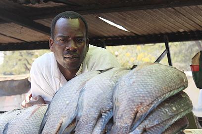 דוכן דגים בשוק קיסומו. נסיכת הנילוס פגעה בכולם (צילום: ניר (שוקו) כהן, אלי סטרול) (צילום: ניר (שוקו) כהן, אלי סטרול)