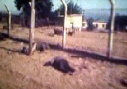 גופות מצרים מוטלות בצדי הדרך, אחרי הצליחה ()