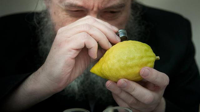 Purchasing an etrog (Photo: Yaron Brenner)