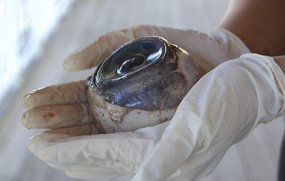 החיתוכים הישרים ביססו את ההערכה: דייג חתך את העין (צילום: רויטרס) (צילום: רויטרס)