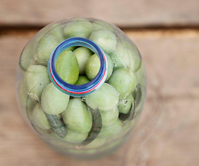 מכניסים את הזיתים הדפוקים לצנצנת וסוגרים עם שום, פלפל ומי מלח (צילום: מיכל וקסמן ) (צילום: מיכל וקסמן )