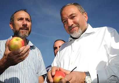 Lieberman enjoying an apple in the Golan Heights (Photo: Effi Sharir, ynet)