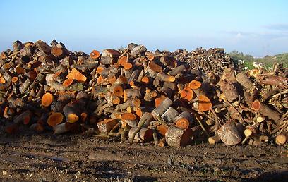 מפחמות במשולש (צילום: באדיבות מטה המאבק בעשן המפחמות)