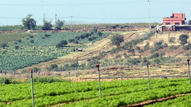 החקלאים שמשקם יושבת - יפוצו (צילום: רועי עידן)