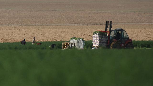 Фермерское хозяйство на границе с Газой. Фото: Рои Идан