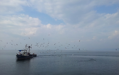 """ספינת דיג בכנרת, הבוקר. """"ישראל לא מתייבשת"""" (צילום: זיו ריינשטיין) (צילום: זיו ריינשטיין)"""
