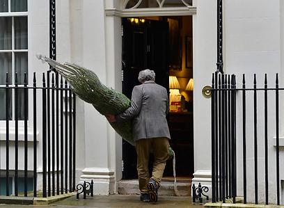 עץ מובא גם למשכן ראש ממשלת בריטניה (צילום: רויטרס) (צילום: רויטרס)