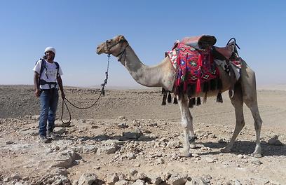 טיול עם גמל הוא אחת האופציות באזור מכתש רמון (צילום: זיו ריינשטיין) (צילום: זיו ריינשטיין)